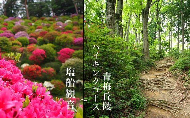 青梅丘陵ハイキングコース&塩船観音 | 埼玉からの山歩き
